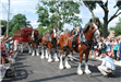 Budweiser Clydesdales Visiting Palatine